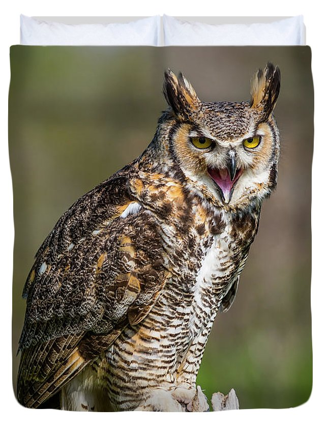 Nature Duvet Cover featuring the photograph Great Horned Owl Screeching by CJ Park