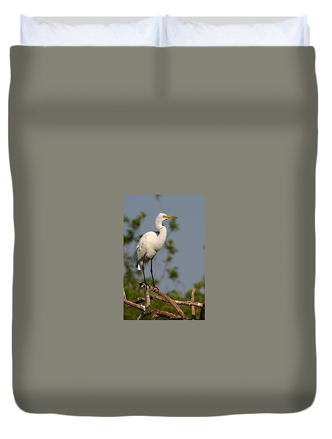 Great White Egret Bird Feathers Flying Florida Sanctuary Wildlife Photograph Photography Duvet Cover featuring the photograph Great White Egret Pose by Shari Jardina