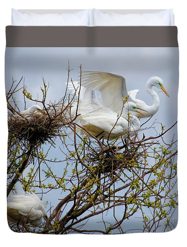 Great Egret Duvet Cover featuring the photograph Great Egrets, Nest Building by TN Fairey