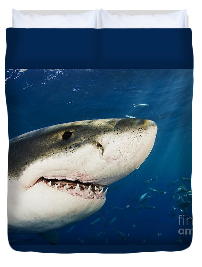 Beautiful Duvet Cover featuring the photograph Great White Shark by Dave Fleetham - Printscapes