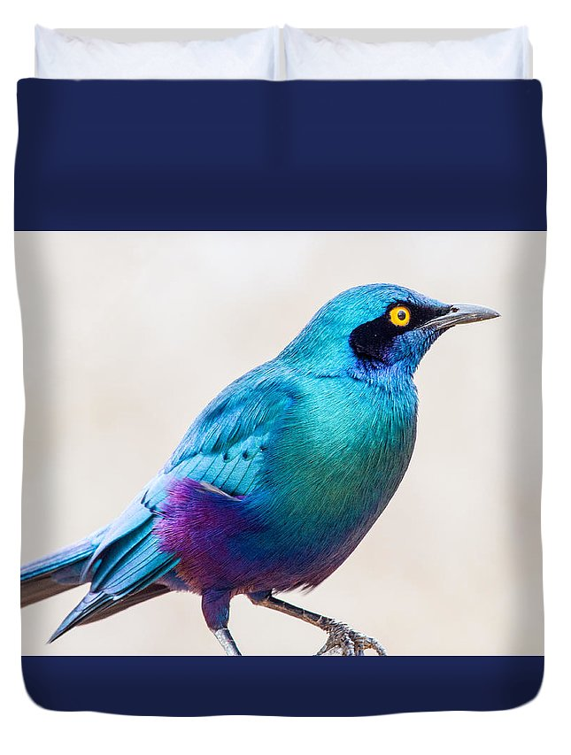 Greater Blue-eared Starling Duvet Cover featuring the photograph Greater Blue-eared Starling by Dave Whited