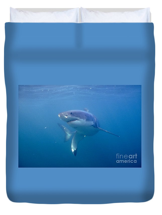 Great White Shark Duvet Cover featuring the photograph Greatest White by Tim Rock