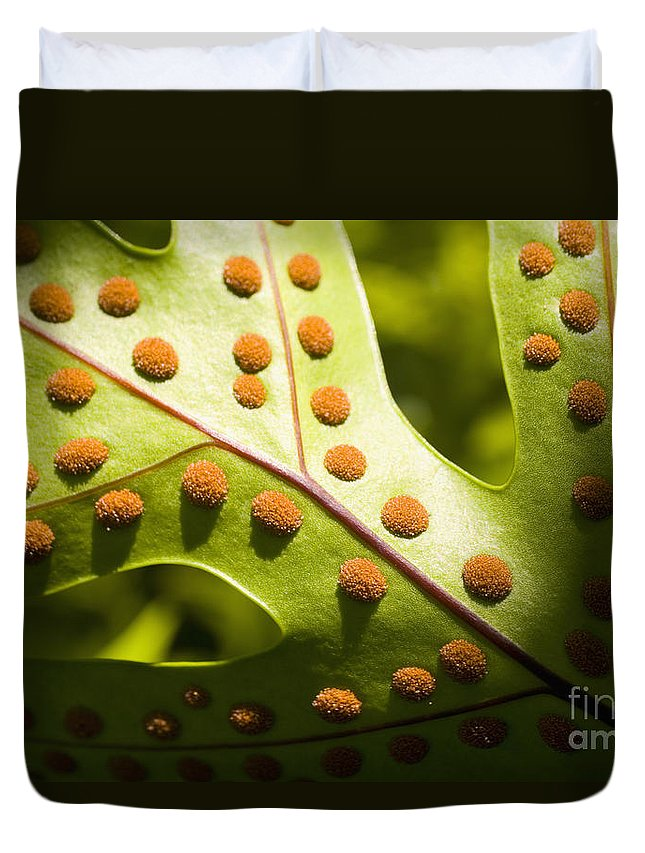 Abstract Duvet Cover featuring the photograph Green And Orange Leaf by Tomas del Amo - Printscapes