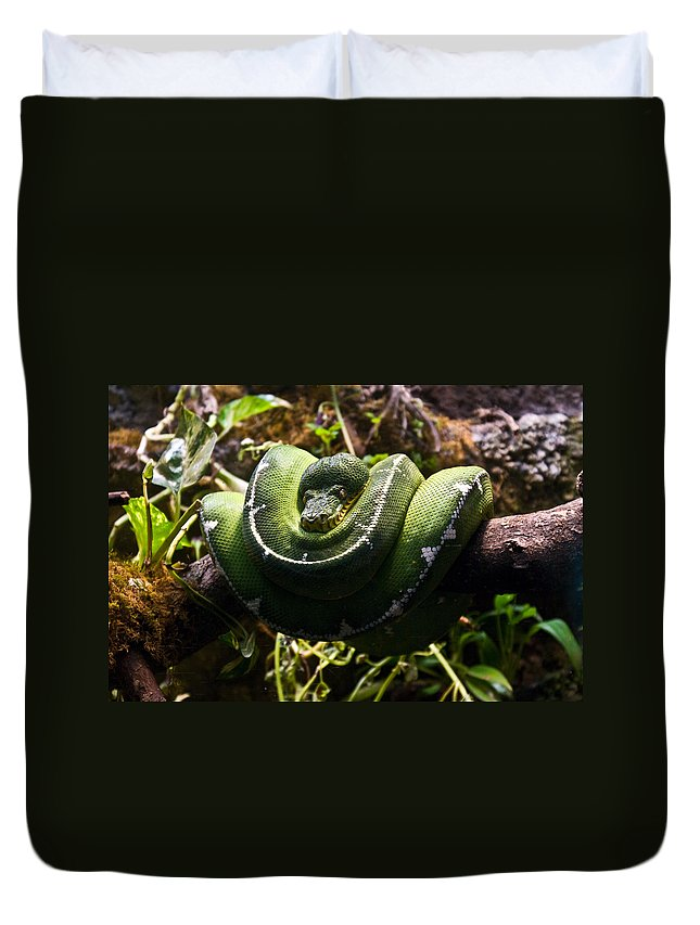 Green Duvet Cover featuring the photograph Green Boa by Douglas Barnett
