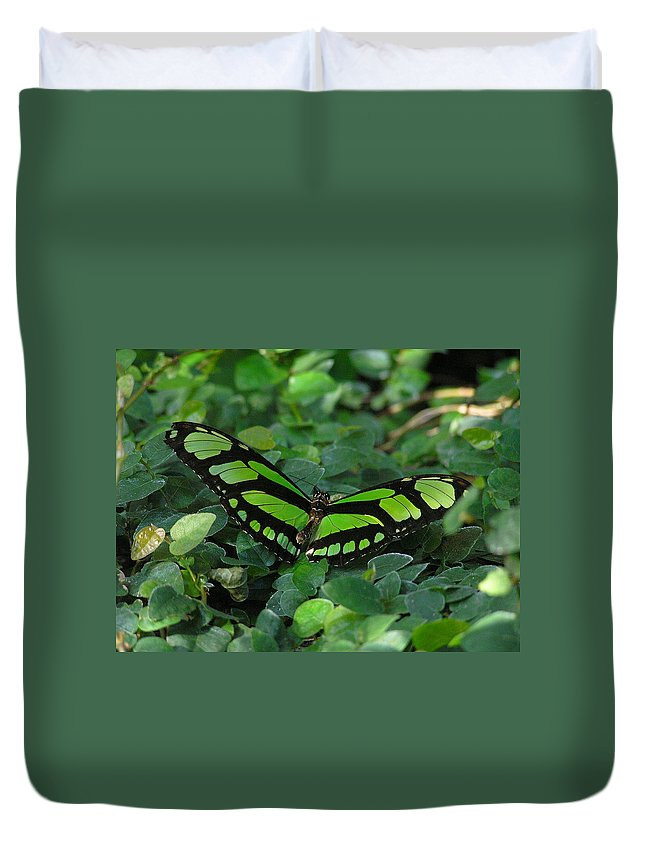 Green Duvet Cover featuring the photograph Green Butterfly by Louise Magno
