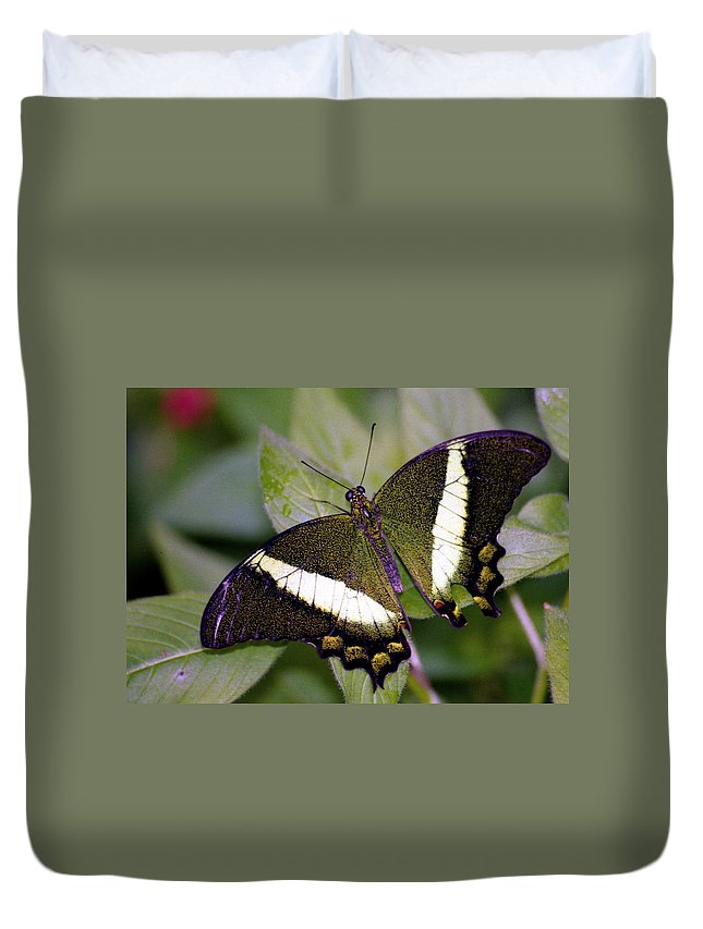 Butterfly Duvet Cover featuring the photograph Green Butterfly by Michael Peychich