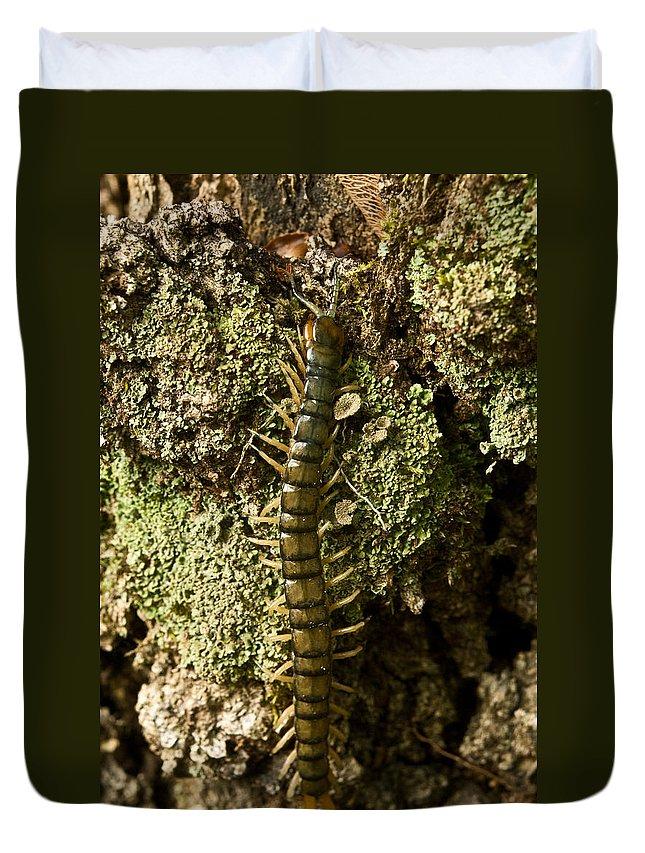 Centipede Duvet Cover featuring the photograph Green Centipede by Douglas Barnett
