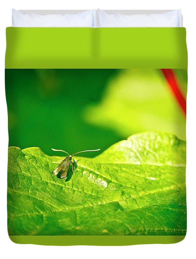 Forest Duvet Cover featuring the photograph Green Creature On A Broad Leaf. by Elena Perelman