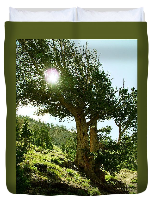 Old Tree Duvet Cover featuring the photograph Green Desert by Micah Campbell