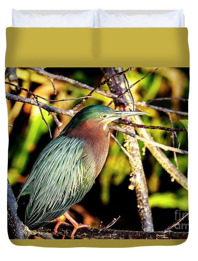 Green Heron Duvet Cover featuring the photograph Green Heron At Green Cay Wetlands by Ben Graham