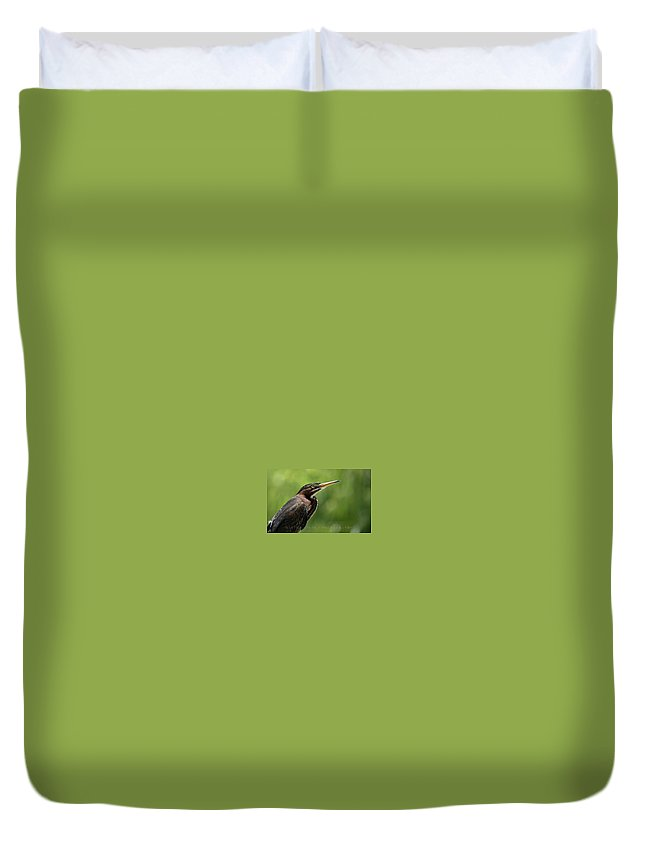 Green Heron Duvet Cover featuring the photograph Green Heron by David Launer
