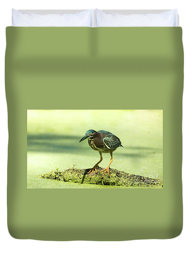 Animal Duvet Cover featuring the photograph Green Heron In Green Algae by Robert Frederick