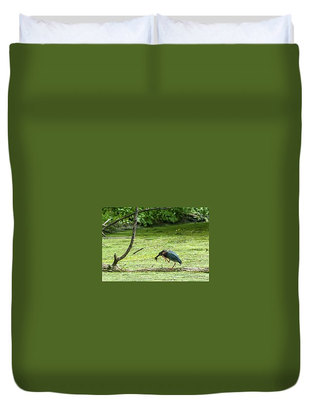 Green Heron Duvet Cover featuring the photograph Green Heron Lunch by Edward Peterson