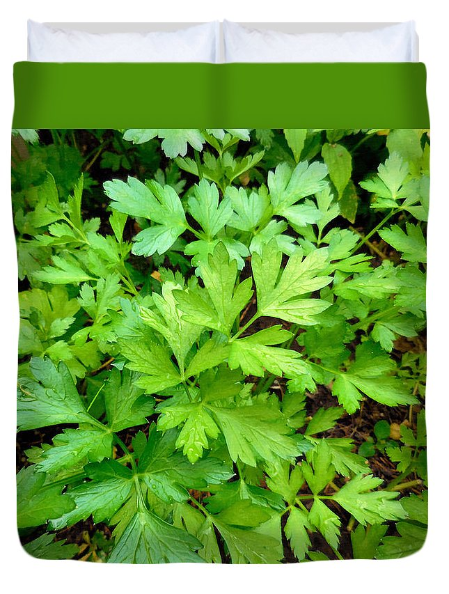 Parsley Duvet Cover featuring the painting Green Parsley 3 by Jeelan Clark