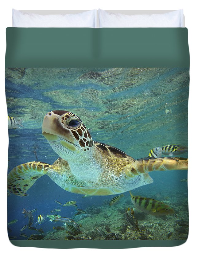 Mp Duvet Cover featuring the photograph Green Sea Turtle Chelonia Mydas by Tim Fitzharris