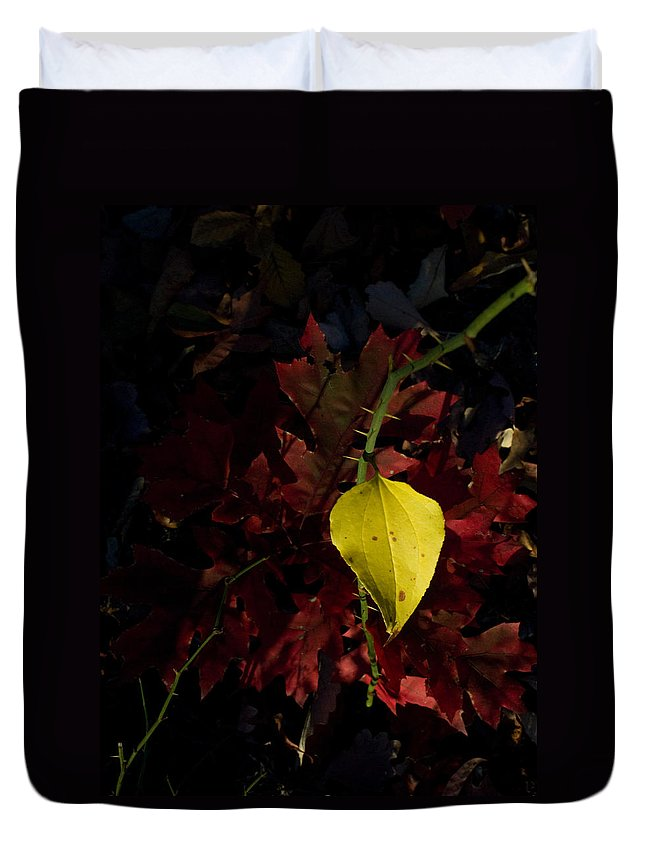 Greenbrier Duvet Cover featuring the photograph Greenbriar Leaf In Evening Sun by Douglas Barnett