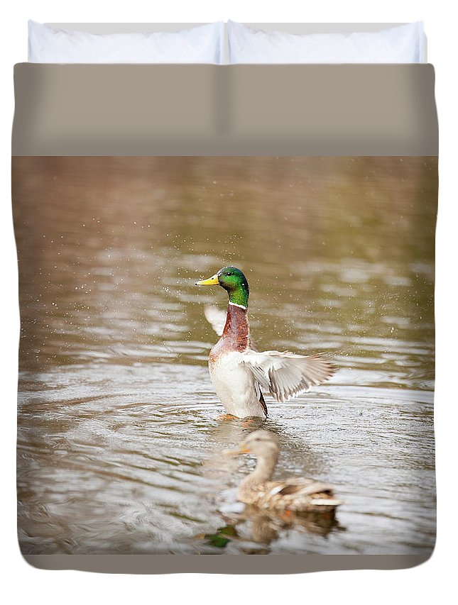Mallard Duvet Cover featuring the photograph Greenhead by Eric Valentine