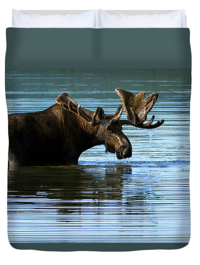 Greeting Duvet Cover featuring the photograph Greeting by Chad Dutson