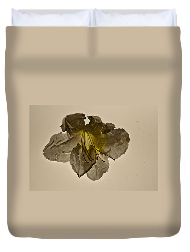 Ghost Duvet Cover featuring the photograph Grey Ghost by Douglas Barnett