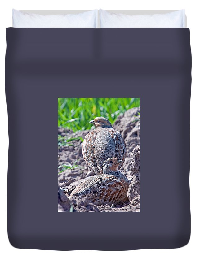 Grey Partridge Duvet Cover featuring the photograph Grey Partridge by Bob Kemp