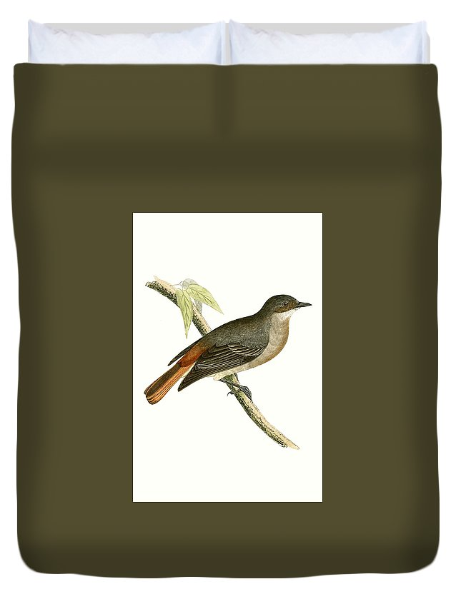 Bird Duvet Cover featuring the painting Grey Redstart by English School