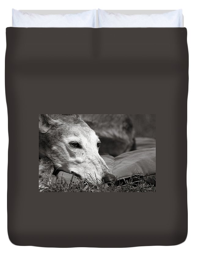 Editorial Duvet Cover featuring the photograph Greyful by Angela Rath
