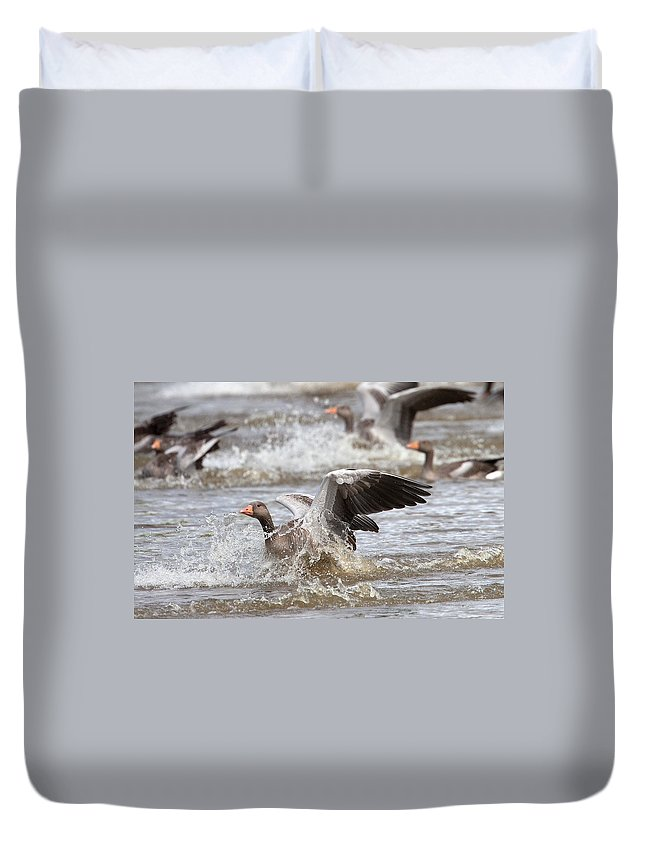 Greylag Duvet Cover featuring the photograph Greylag Goose Landing by Bob Kemp