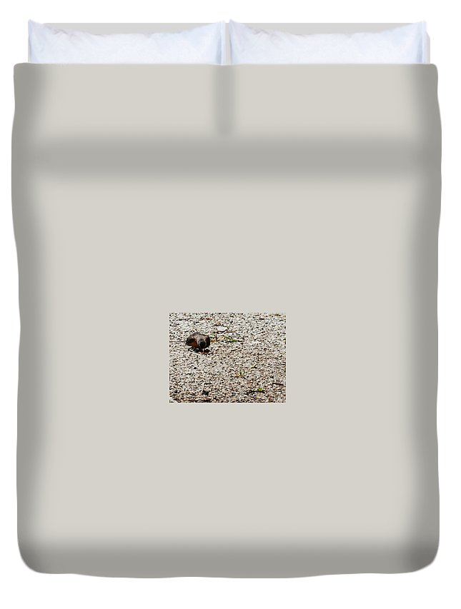 Heron Heaven Duvet Cover featuring the photograph Grocery Shopping by Edward Peterson