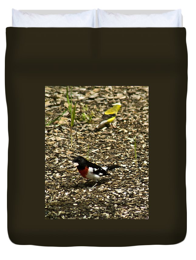 Rose Duvet Cover featuring the photograph Grosbeak With Quizzical Look by Douglas Barnett
