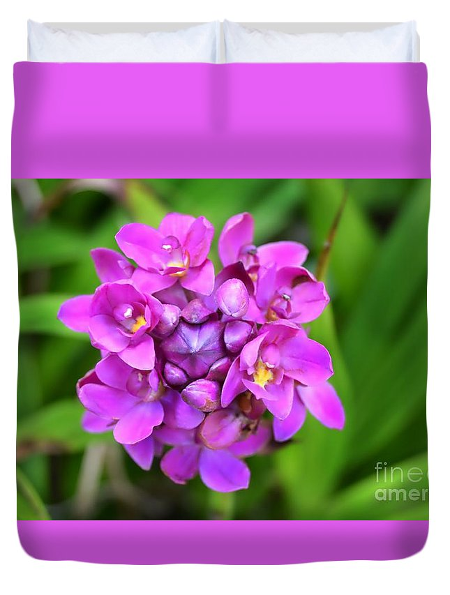 Flower Duvet Cover featuring the photograph Ground Orchid by Glenn Forman