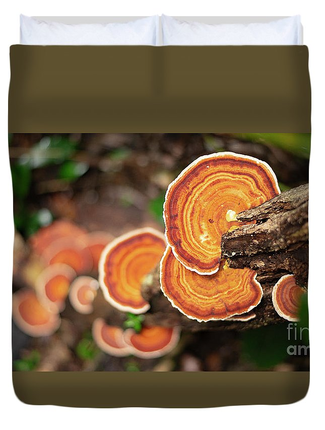Mushroom Duvet Cover featuring the photograph Group Of Orange Mushrooms by Rob D