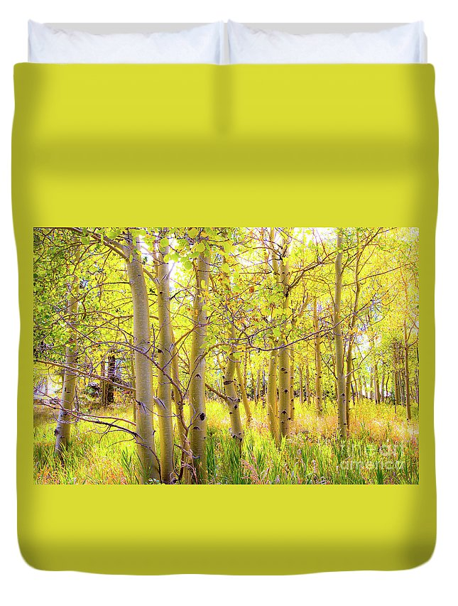Aspen Duvet Cover featuring the photograph Grove Of Aspens On An Autumn Day by Amy Sorvillo