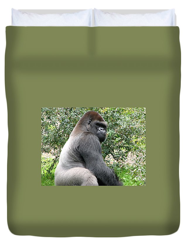 Gorilla Duvet Cover featuring the photograph Grumpy Gorilla by Stacey May