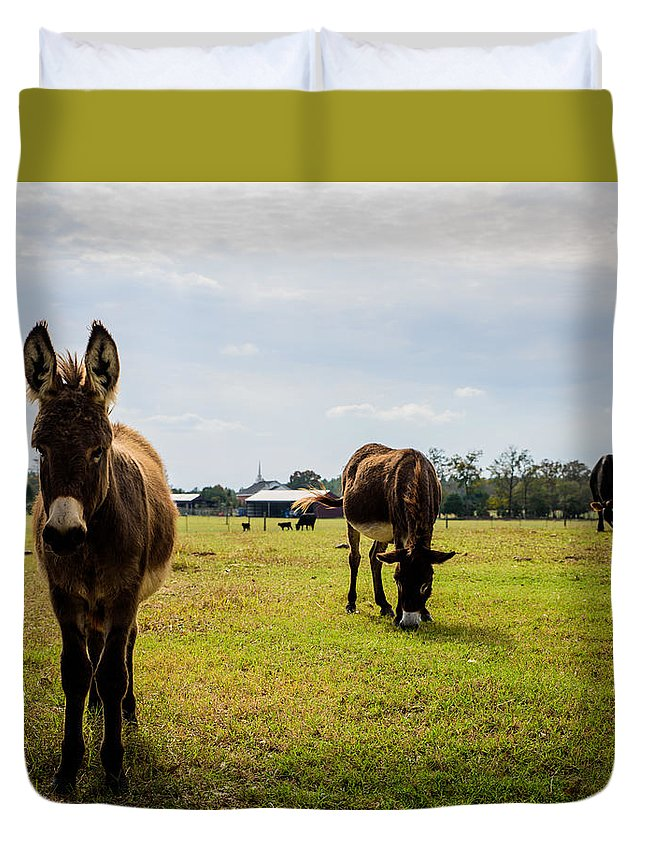3 Type Duvet Cover featuring the photograph Guard Donkeys by Alicia Collins