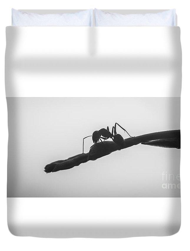Ant Duvet Cover featuring the photograph Guard Of Eden by Supasit Srisawathsak