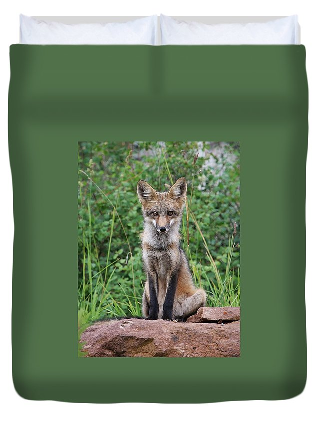 Fox Duvet Cover featuring the photograph Guardian by LeAnne Perry