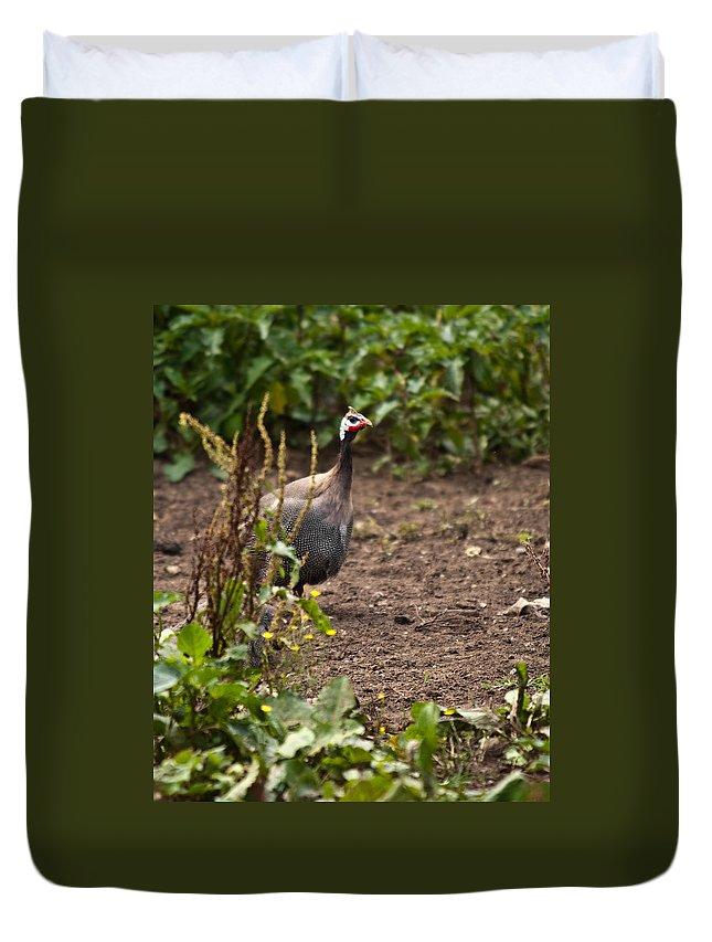 Galliformes Duvet Cover featuring the photograph Guineafowl 2 by Douglas Barnett