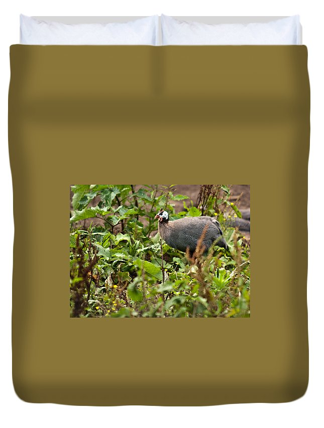Galliformes Duvet Cover featuring the photograph Guineafowl 3 by Douglas Barnett