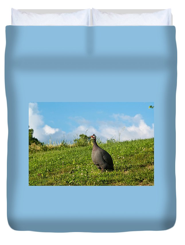 Galliformes Duvet Cover featuring the photograph Guineafowl Searching by Douglas Barnett