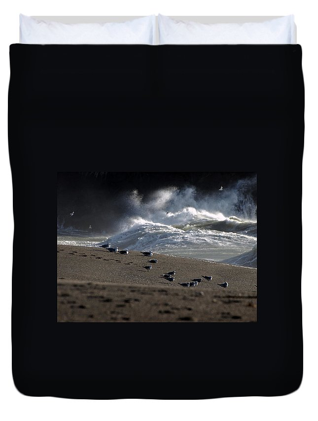 Seascape Duvet Cover featuring the photograph Gulls At Goat Rock Sundown by Richard Thomas