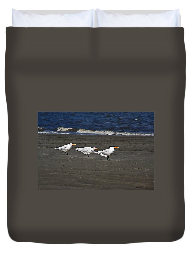 Beaches Duvet Cover featuring the photograph Gulls On Beach by David Campbell
