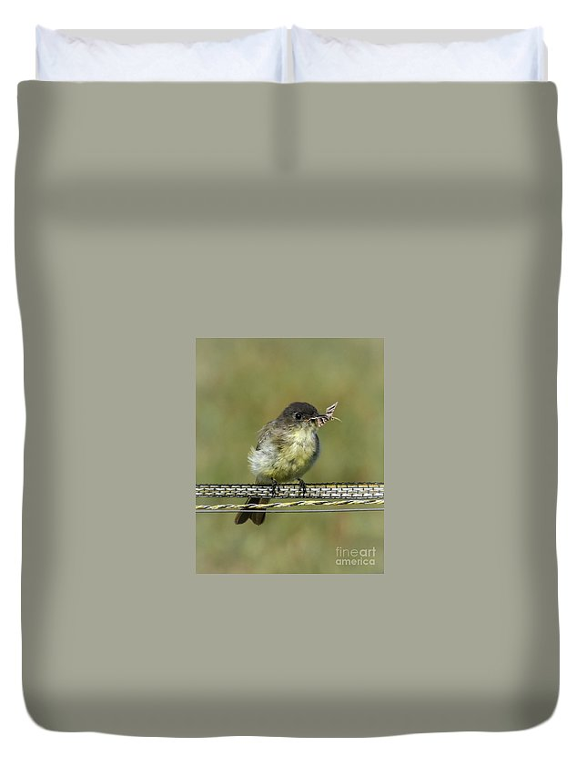 Eastern Phoebe Duvet Cover featuring the photograph Gypsy Moth Patrol On Duty by Amy Porter