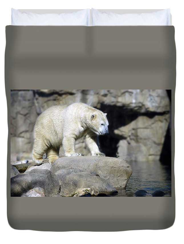 Memphis Zoo Duvet Cover featuring the photograph Habitat - Memphis Zoo by D'Arcy Evans