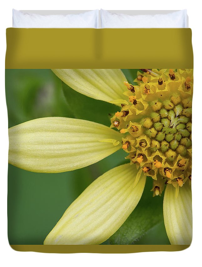 Smallanthus Uvedalia Duvet Cover featuring the photograph Hairy Leafcup #2 by Paul Rebmann