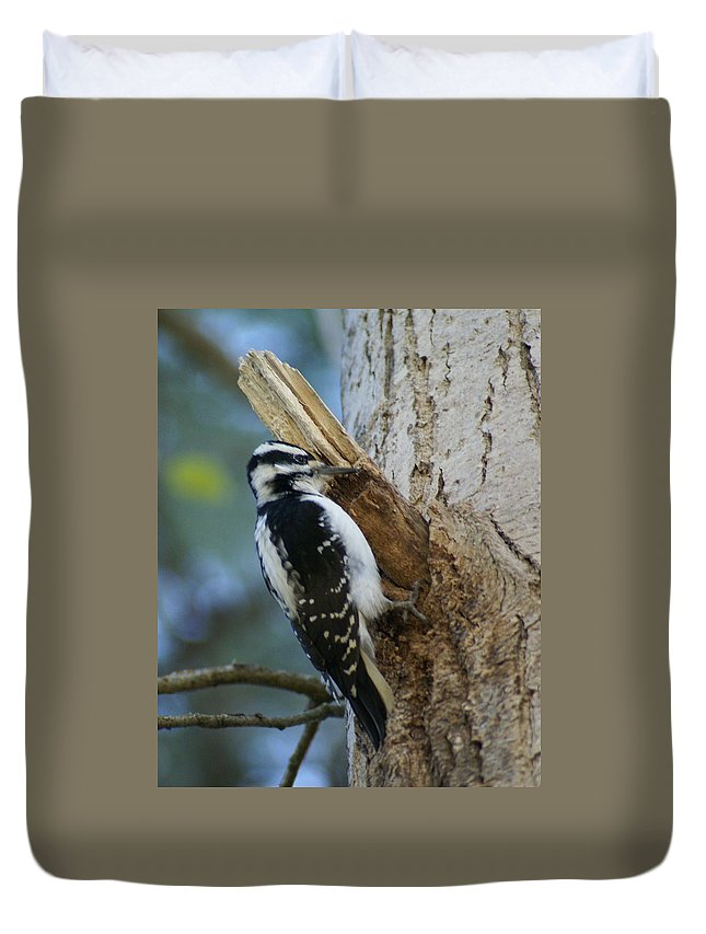 Birds Duvet Cover featuring the photograph Hairy Woodpecker by Ben Upham III