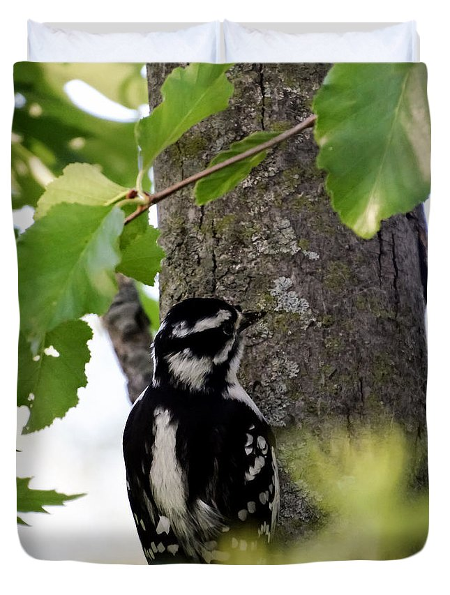 Downy Woodpecker 01 Duvet Cover featuring the photograph Downy Woodpecker 01 by Cynthia Woods