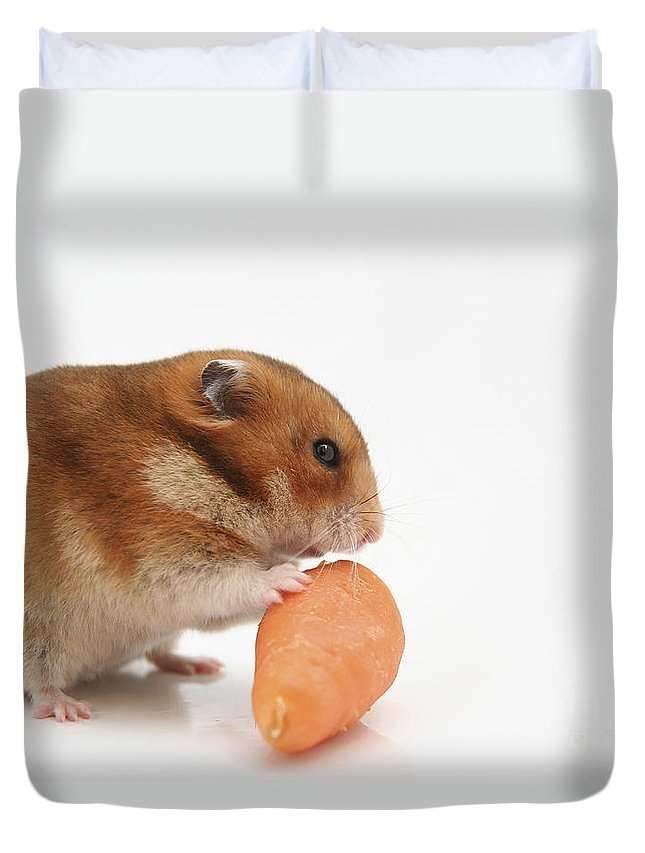 Hamster Duvet Cover featuring the photograph Hamster Eating A Carrot by Yedidya yos mizrachi