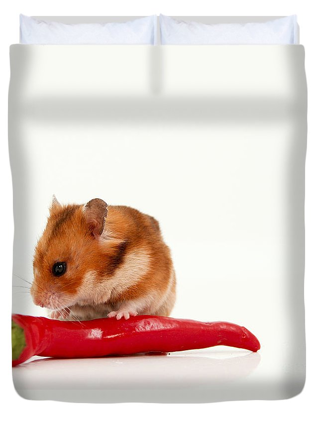 Hamster Duvet Cover featuring the photograph Hamster Eating A Red Hot Pepper by Yedidya yos mizrachi