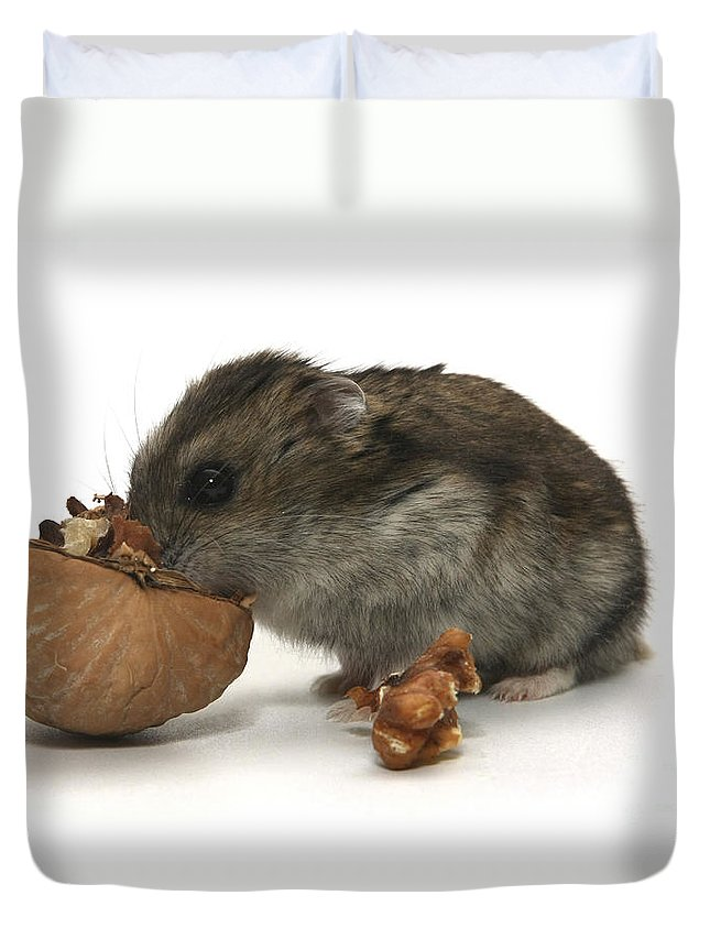 Hamster Duvet Cover featuring the photograph Hamster Eating A Walnut by Yedidya yos mizrachi
