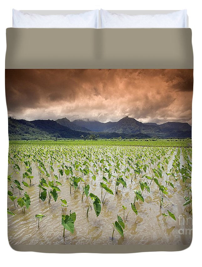 30-csm0101 Duvet Cover featuring the photograph Hanalei Taro by Dave Fleetham - Printscapes